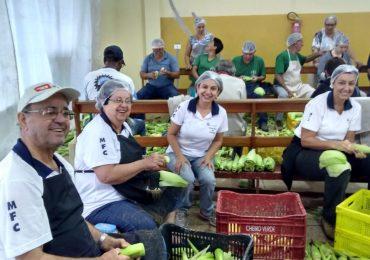 MFC Jovem Santo Antônio da Platina: Festa do Milho