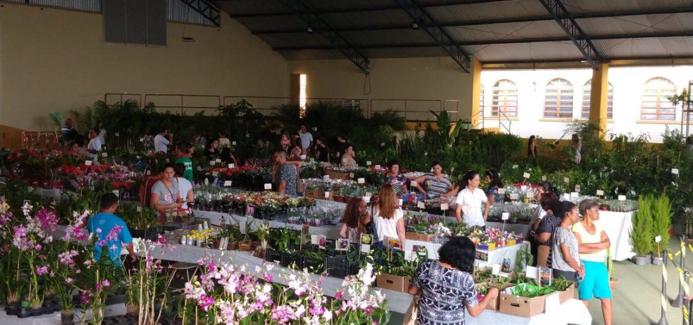 MFC Santo Antônio da Platina: Ação